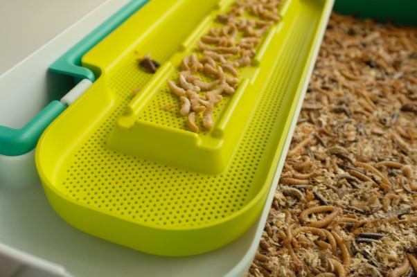 Teaching STEM through the wonders of larva harvesting