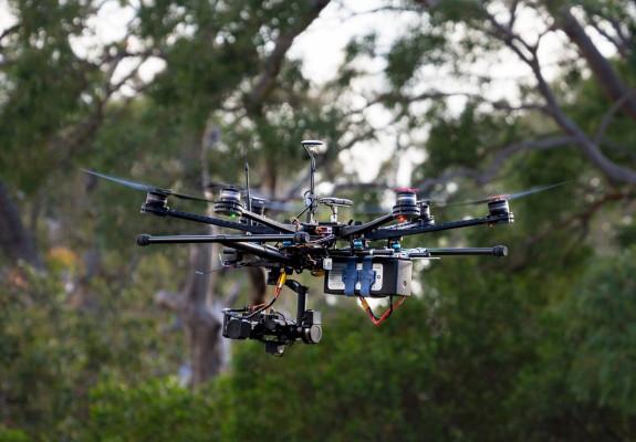 Koala-sensing drone helps keep tabs on drop bear numbers