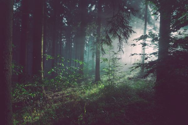 Forest Admin raises $7 million to help you build admin panels