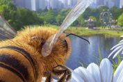 Review: Bee Simulator - An Interesting Idea That Never Really Takes Flight