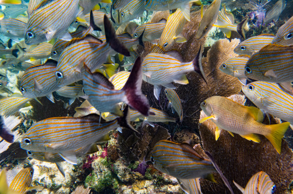 Researchers find making a sick reef sound like a healthy one could help its recovery