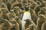 For SaaS startups, differentiation is an iterative process