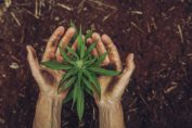 Eaze and Wayv founder explains how to raise money for cannabis startups