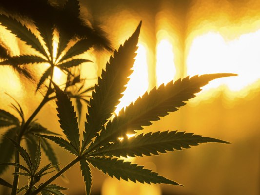 Cannabis banking act passes U.S. House with bipartisan support