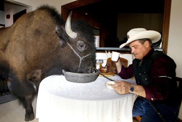 Investors eat up Orbillion Bio's plans for lab-grown wagyu beef, elk, and bison
