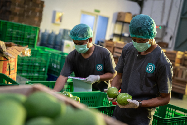 Indonesian agritech platform TaniHub Group harvests a $65.5M Series B round